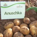 Anuschka_4