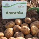 Anuschka_7