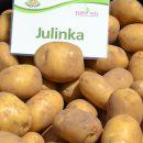 Julinka_06