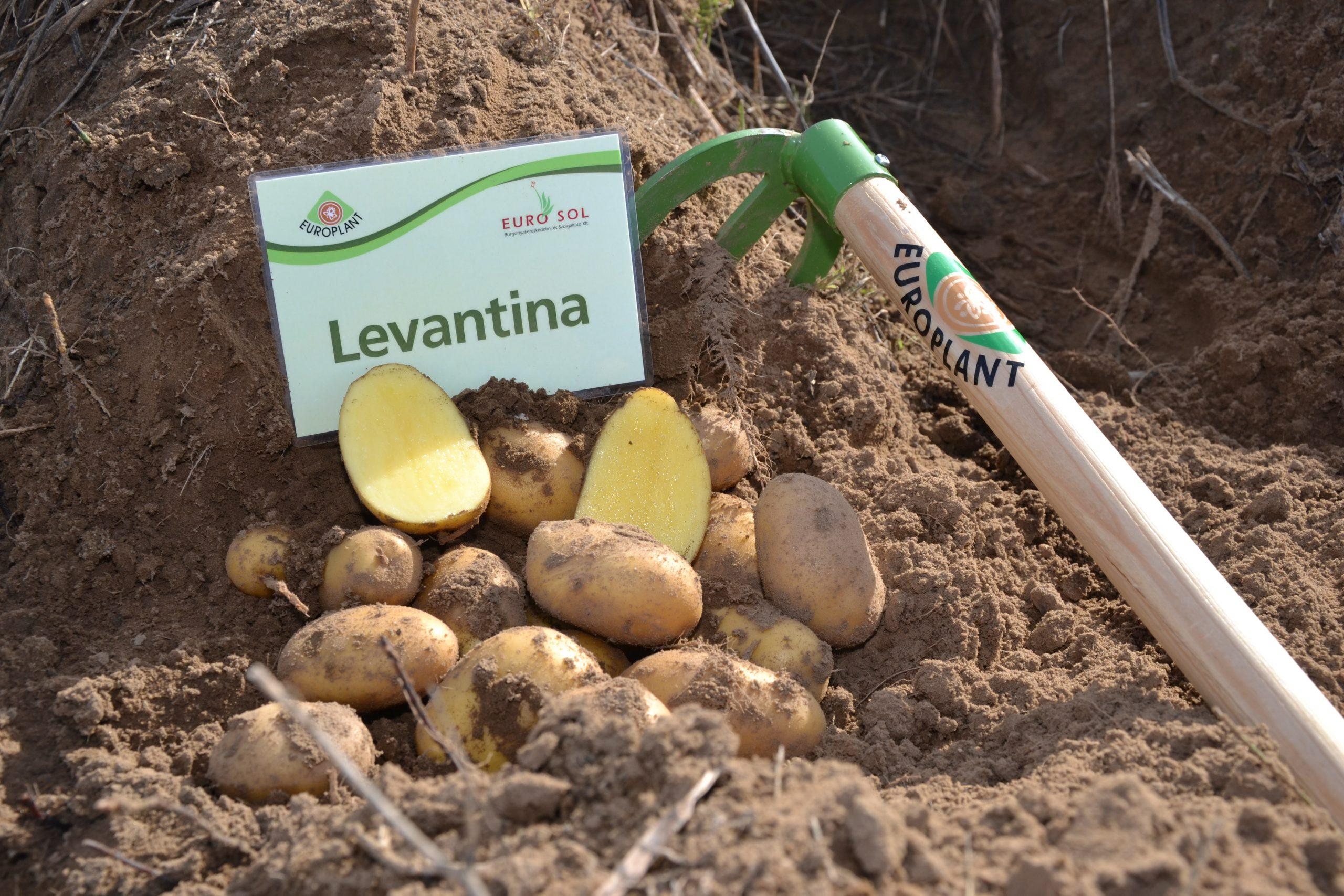 Levantina_03