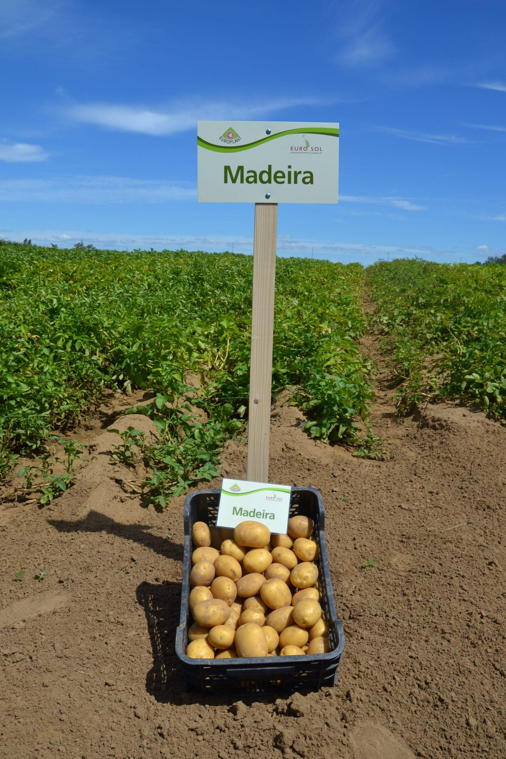 Madeira_05
