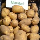 Marabel_6
