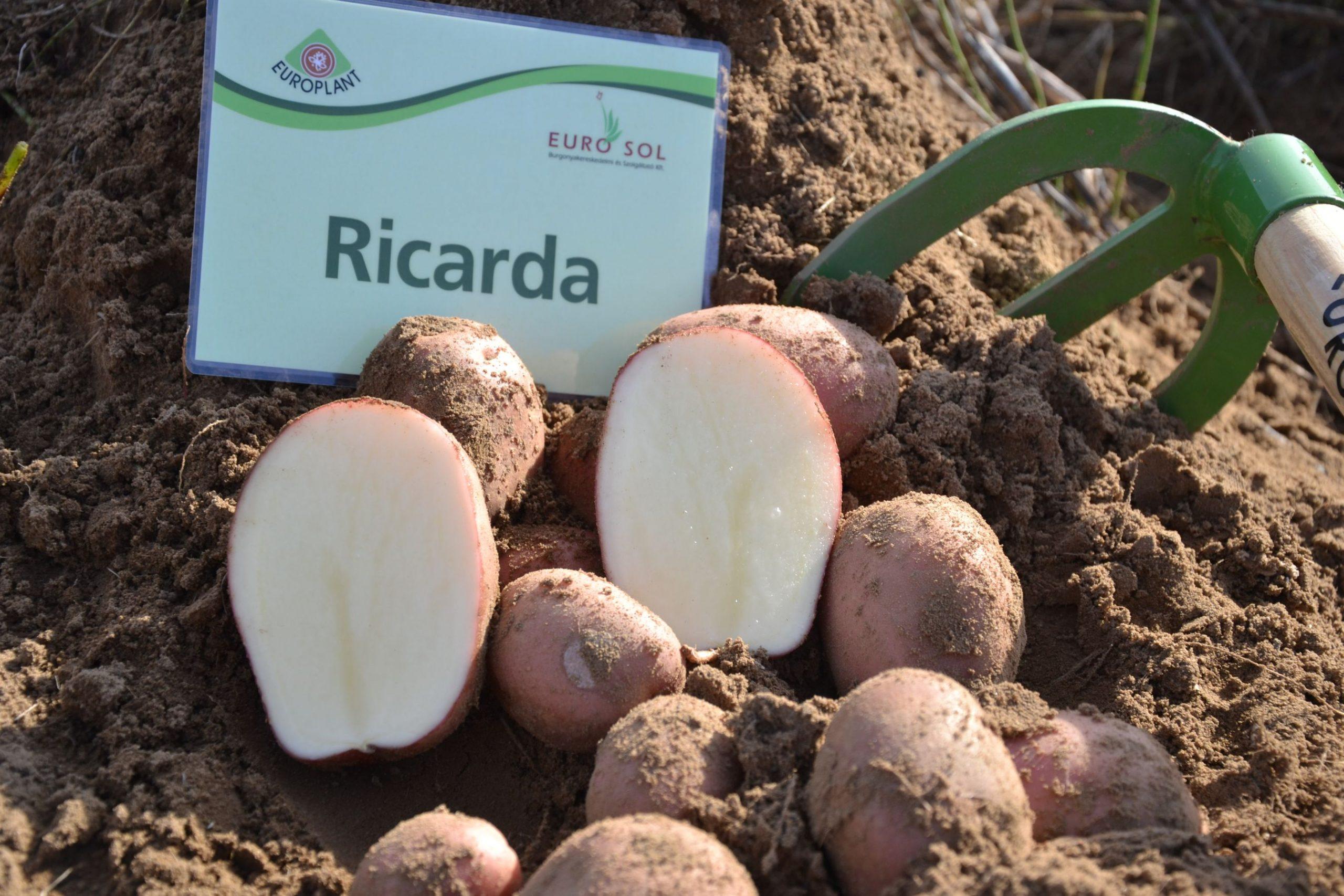 Ricarda_03