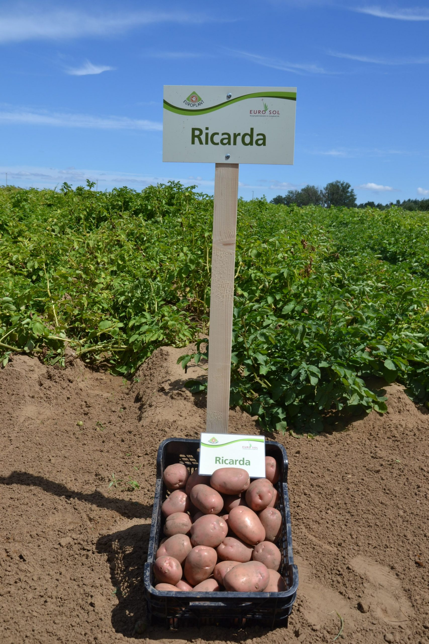 Ricarda_05