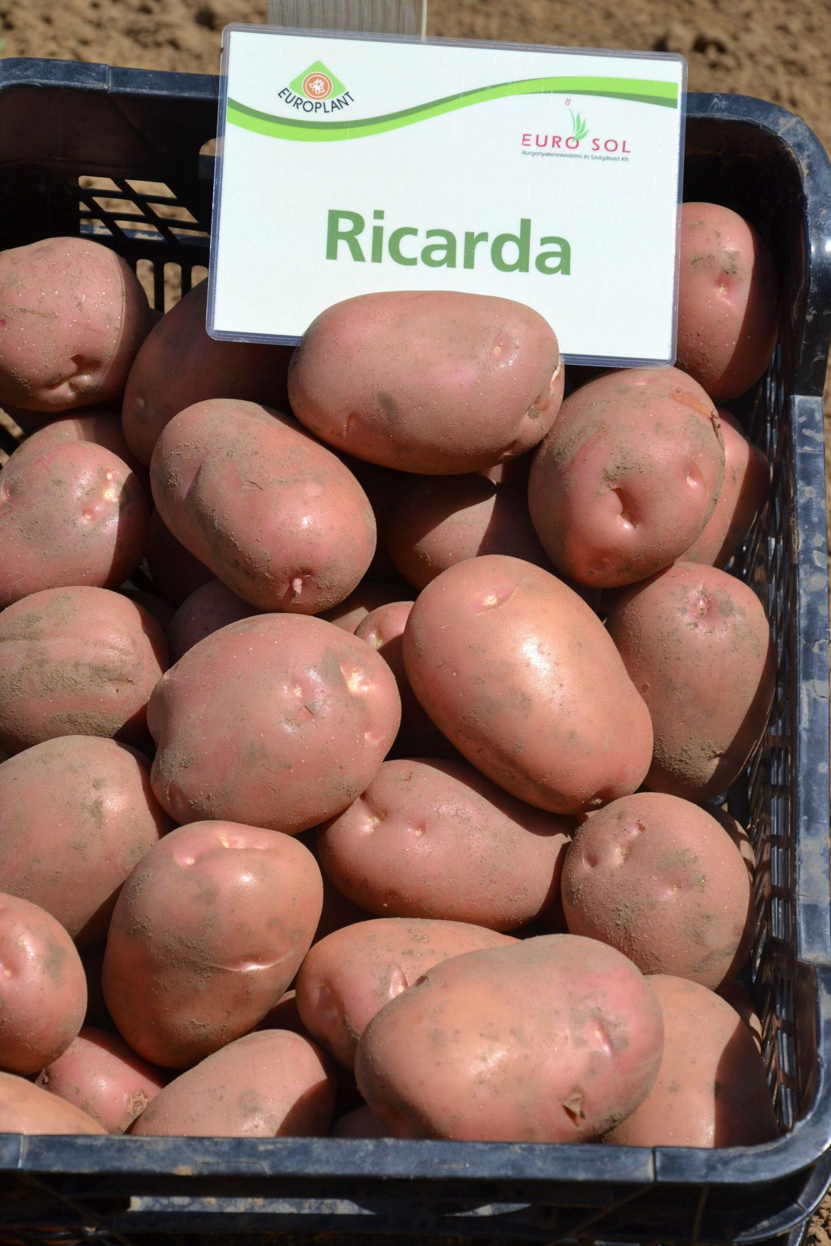 Ricarda_06