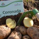 coronada_3
