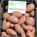 red-fantasy_2