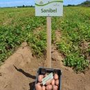 sanibel_5